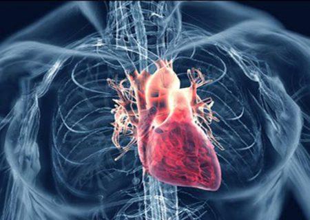 فراهم شدن امکان افزایش طول عمر دریچههای بیولوژیکی قلب